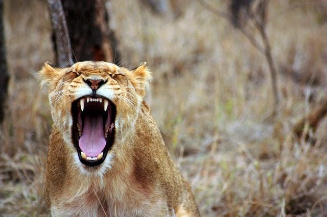 Hayvanlarda Down Sendromu Görülebilir mi?